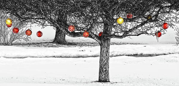 Christmas Art Print featuring the photograph Winter Fruits by Tatiana Travelways