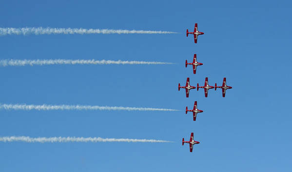 Snowbirds Art Print featuring the photograph The Snowbirds by Tatiana Travelways