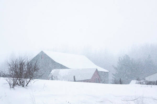 Barns Art Print featuring the photograph Barns In The Snow by Tatiana Travelways