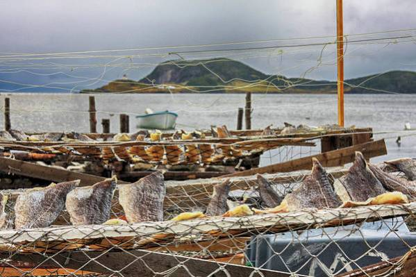Fish Drying in Salvage Newfoundland by Tatiana Travelways