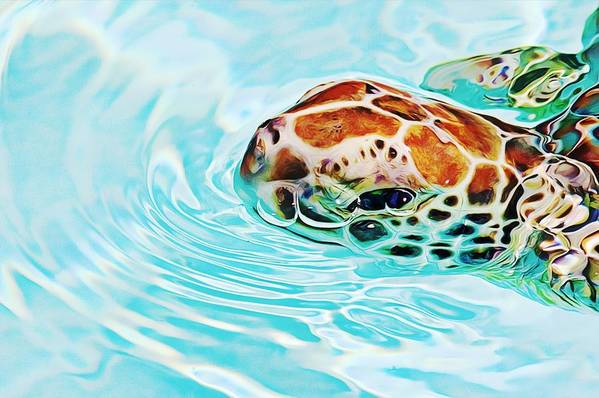 Turtle Art Print featuring the photograph Swimming Cutie by Tatiana Travelways