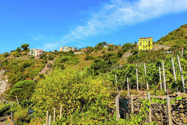 Village of Corniglia By Aashish Vaidya