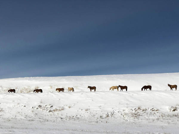 Wild Horses Art Print featuring the photograph Montana Wild Horses Crossing In Winter by Tatiana Travelways