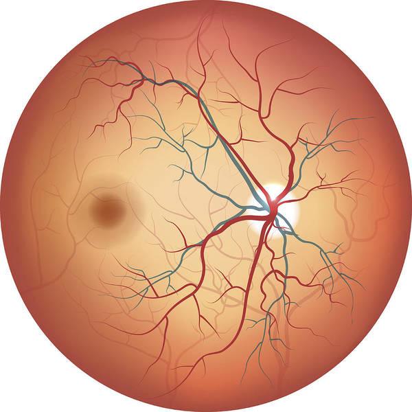human eye anatomy retina