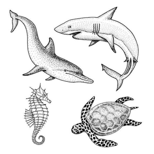 Sea Creature Dolphin And White Shark, Cheloniidae Or Green