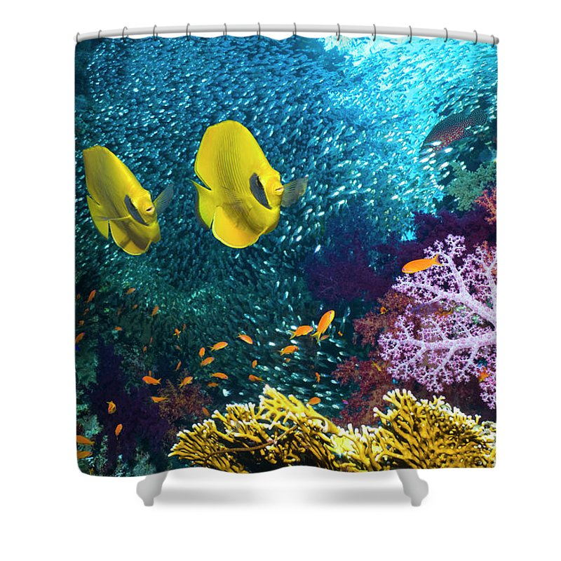 coral reef scenery shower curtain