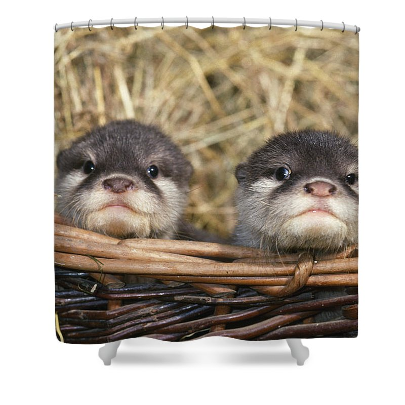 baby european otters shower curtain