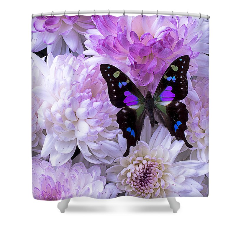 black and purple butterfly on mums shower curtain