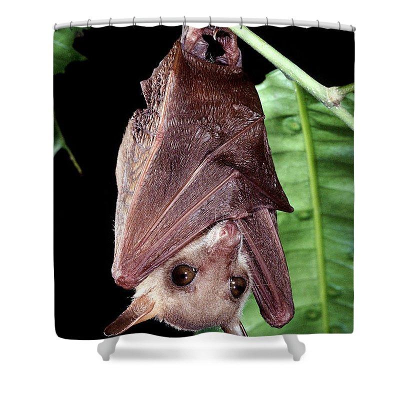 northern blossom bat shower curtain