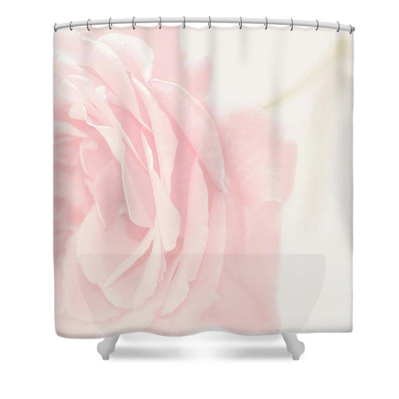 blush pink rose shower curtain