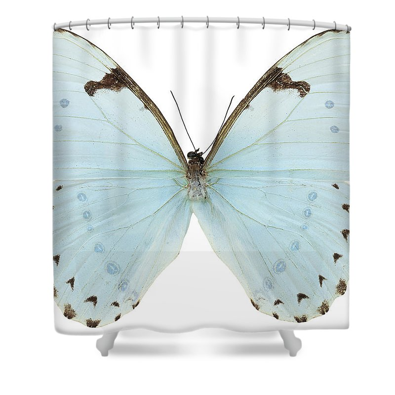 close up of a white butterfly shower curtain