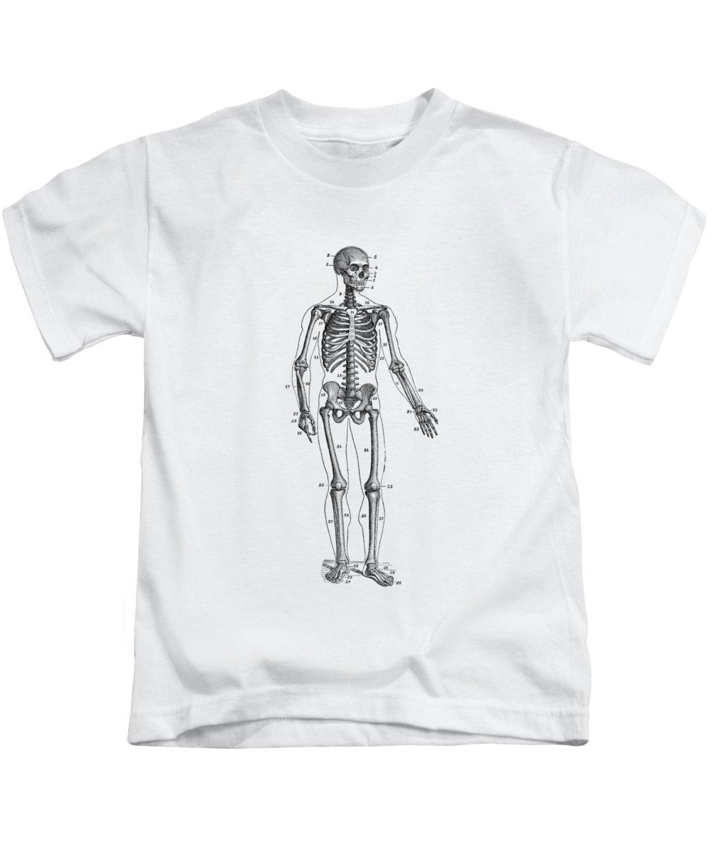 medium resolution of forward facing skeletal diagram vintage anatomy poster kids t shirt for sale by vintage anatomy prints