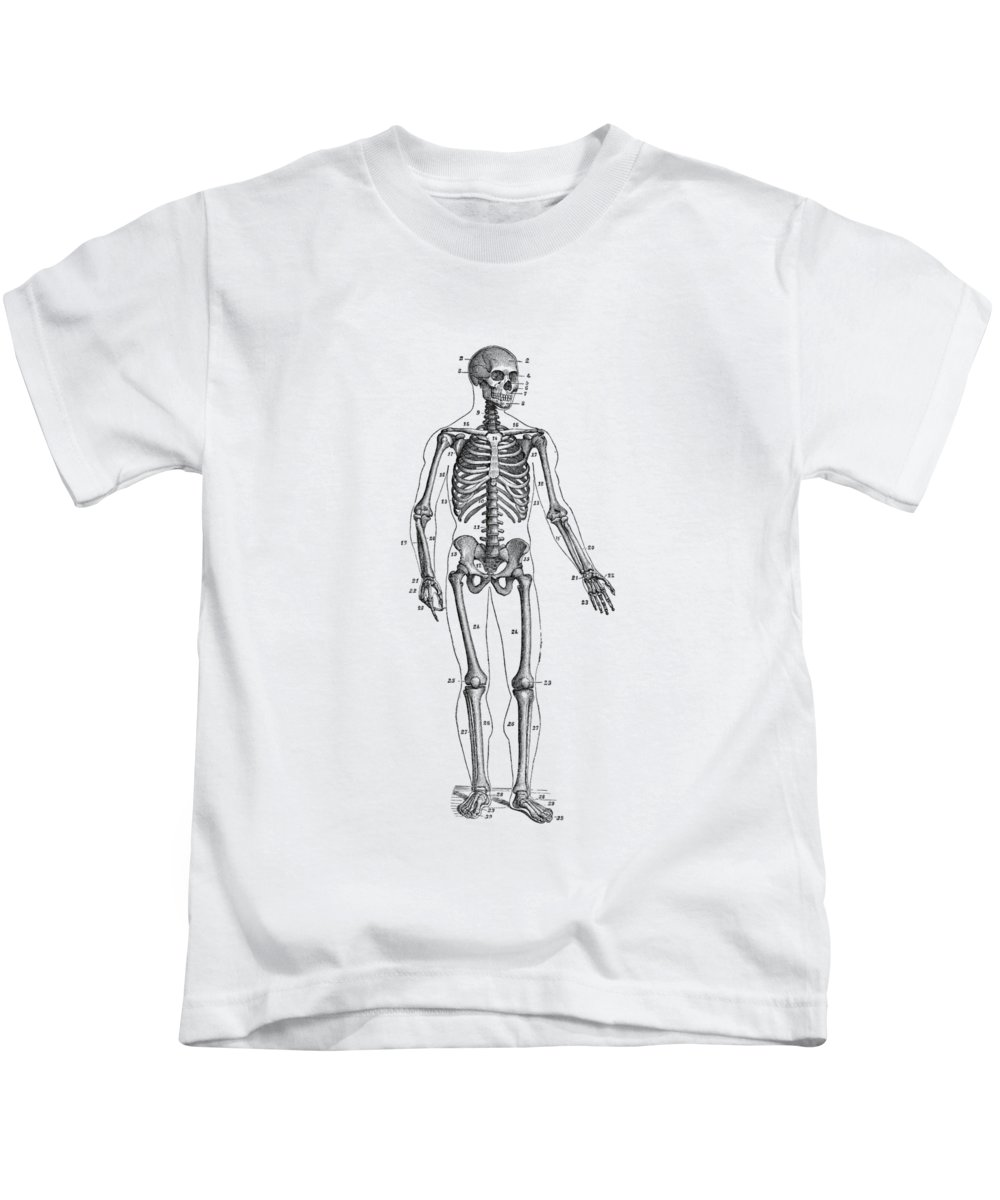 small resolution of forward facing skeletal diagram vintage anatomy poster kids t shirt for sale by vintage anatomy prints