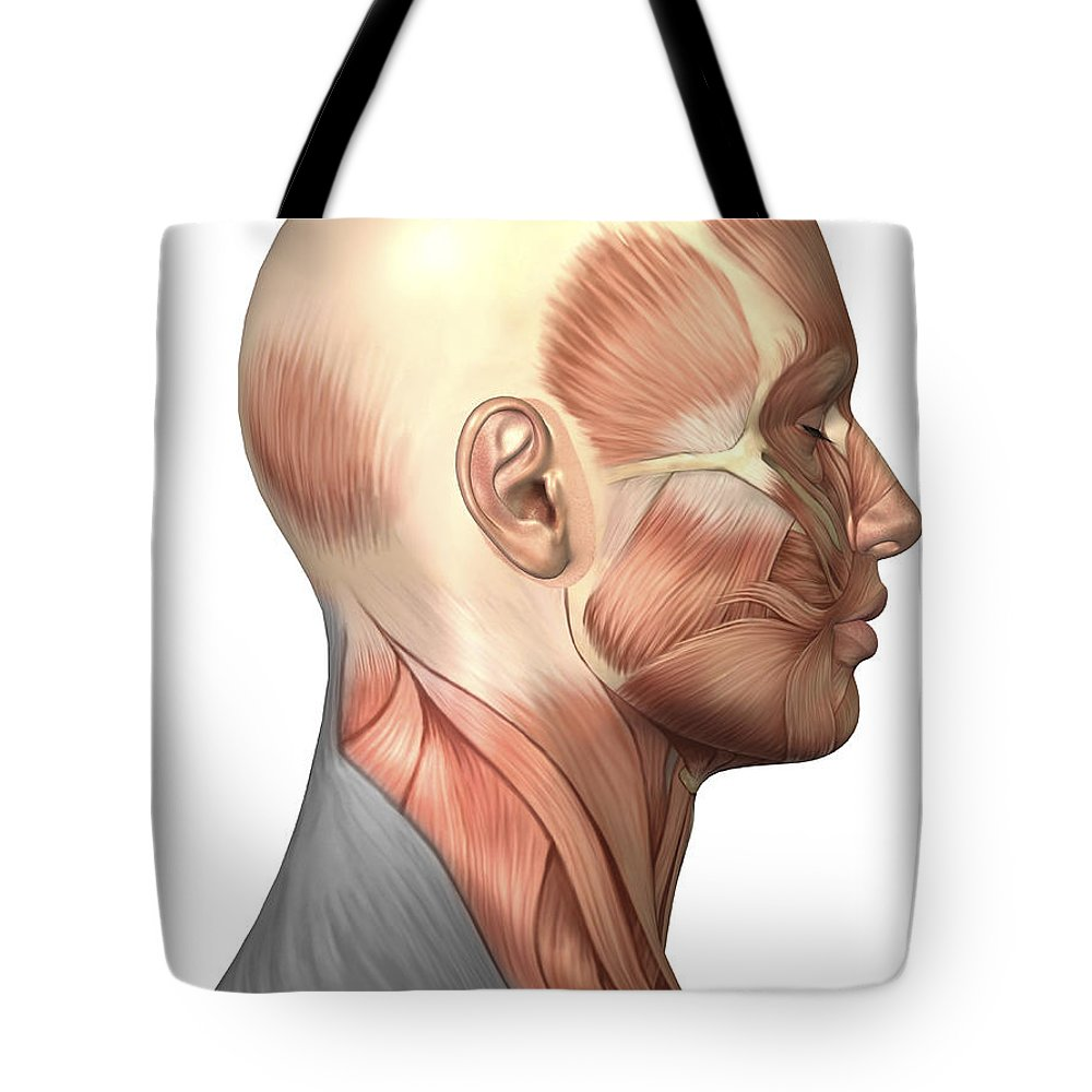 hight resolution of vertical tote bag featuring the digital art anatomy of human face muscles side by stocktrek