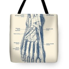 Veins In The Foot Diagram Circular Flow Chart Template Human Circulatory System Tote Bag For Sale By Vintage Featuring Drawing Anatomy Prints