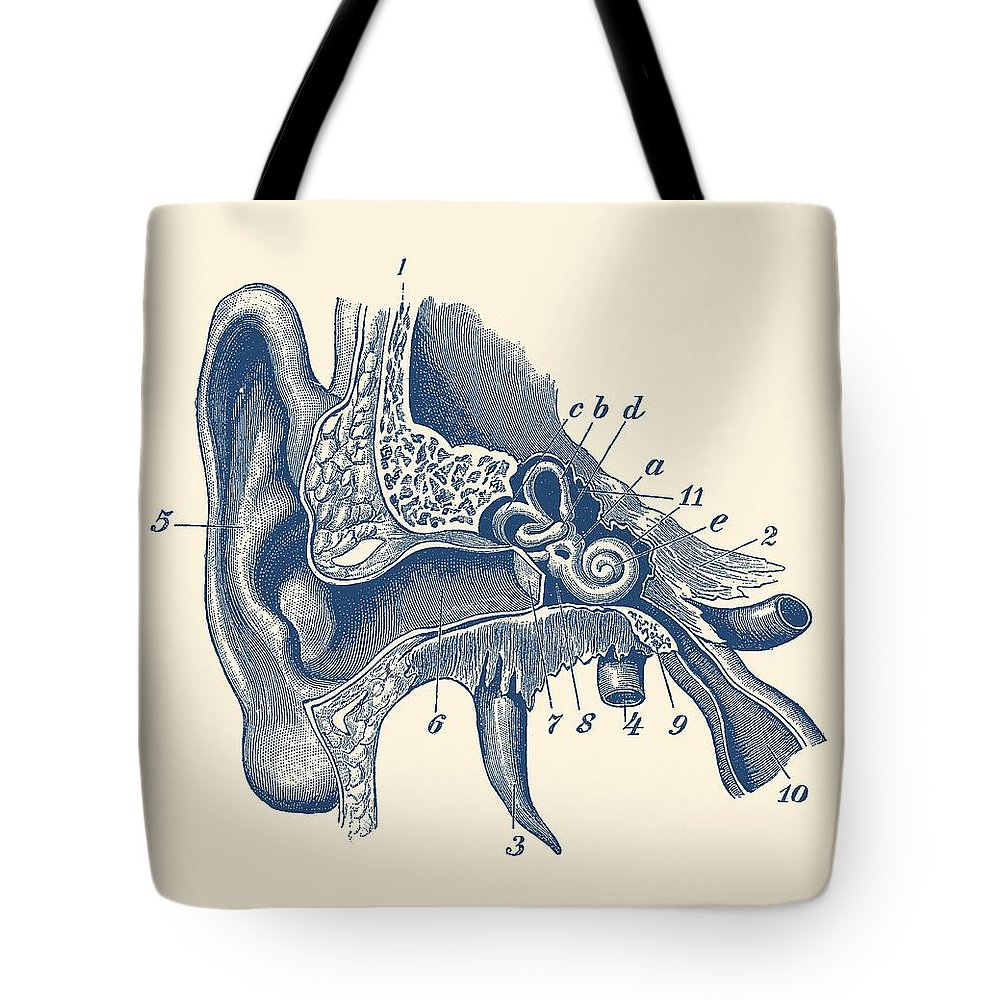 ear tote bag featuring the drawing human inner ear anatomy diagram vintage print by vintage [ 1000 x 1000 Pixel ]