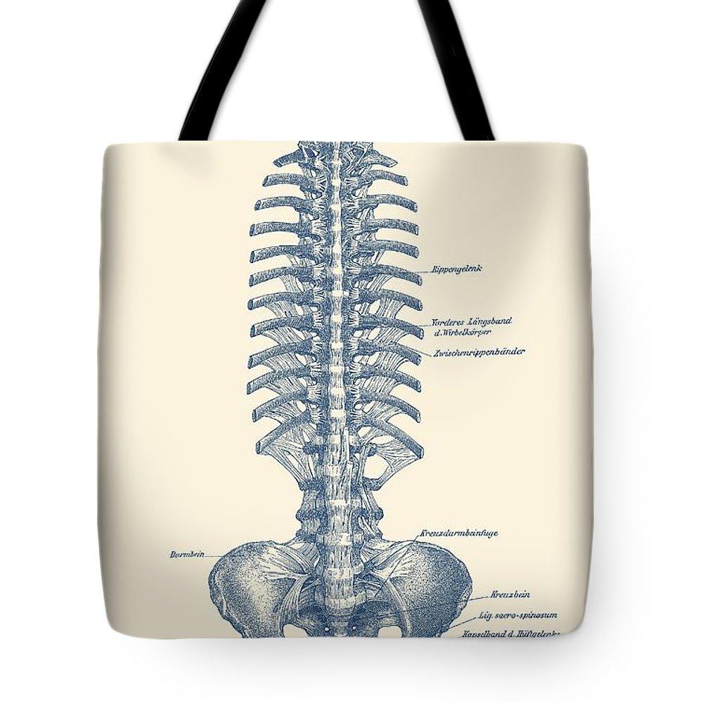 human spine and pelvis simple diagram vintage anatomy tote bag for sale by vintage anatomy prints [ 1000 x 1000 Pixel ]