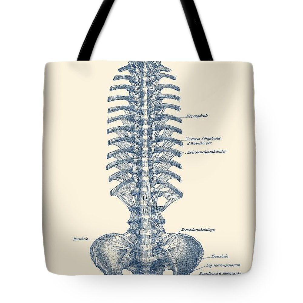 small resolution of human spine and pelvis simple diagram vintage anatomy tote bag for sale by vintage anatomy prints