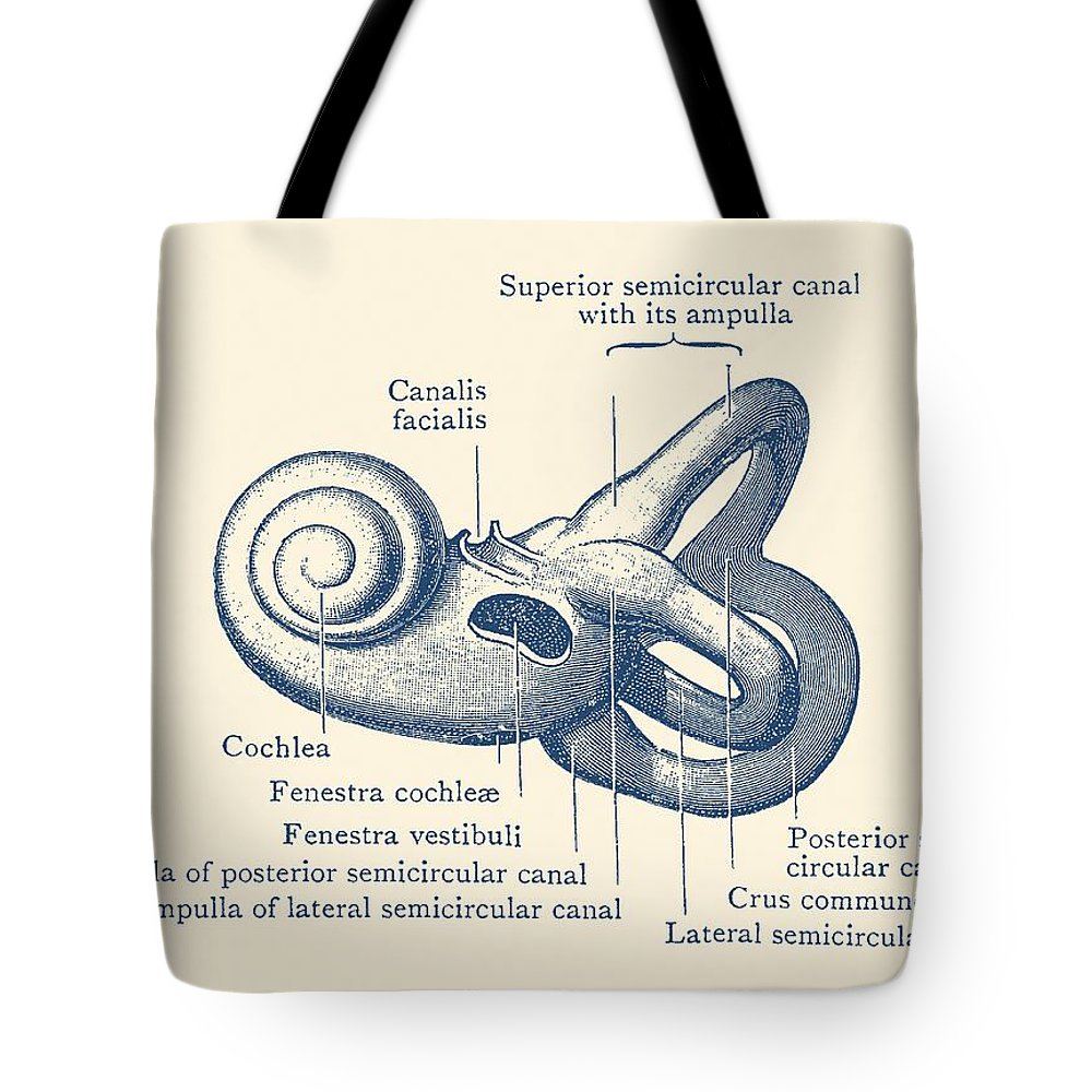 ear tote bag featuring the drawing inner ear anatomy diagram vintage poster by vintage anatomy [ 1000 x 1000 Pixel ]