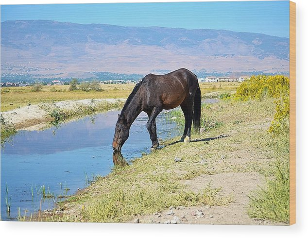 Mustang Wood Print featuring the photograph Thirsty Mustang by Maria Jansson