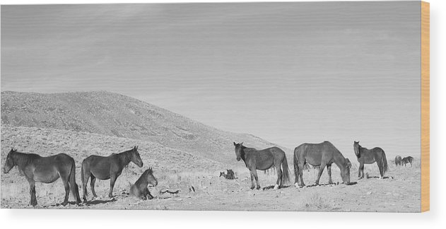 Wild Horse Annies Mustangs Wood Print featuring the photograph Wild Horse Annies Mustangs by Maria Jansson