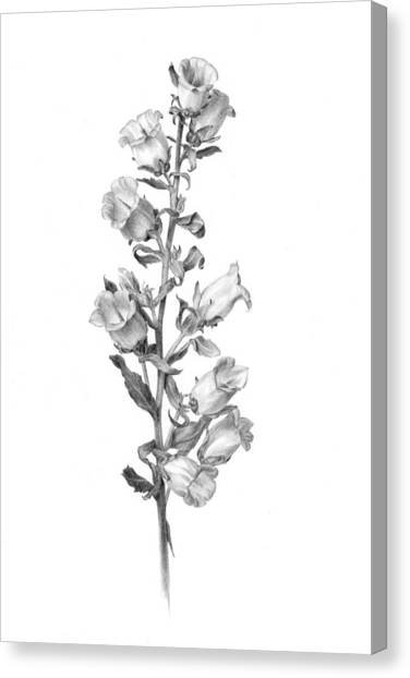 Bell Flower Drawing by Diane Cardaci