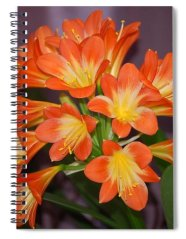 Spiral Notebook featuring the photograph Clivia Blossoms by Nancy Ayanna Wyatt