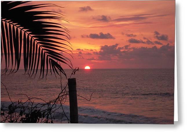 Flamingo Sunset Photograph By Anastasia Konn