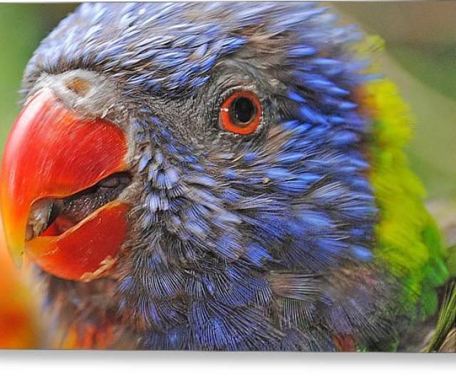 Beautiful Bird Greeting Card By Shauna Obrien