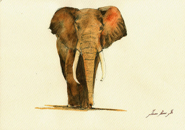 elephant watercolor paintings fine