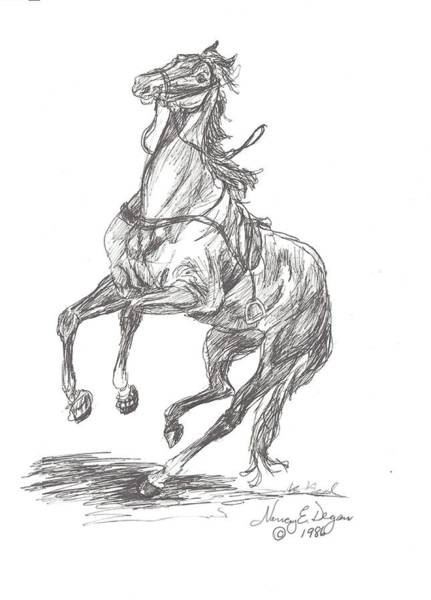Rearing Loose Horse Drawing by Nancy Degan