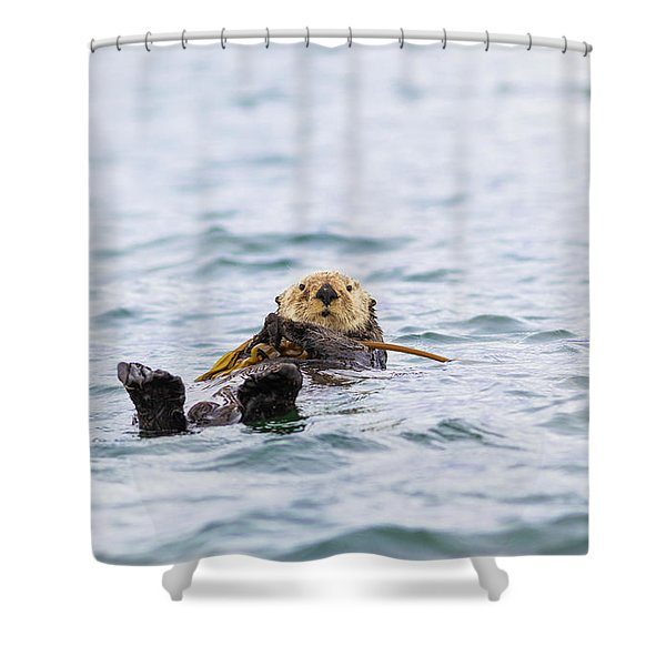 sea otter shower curtains for sale