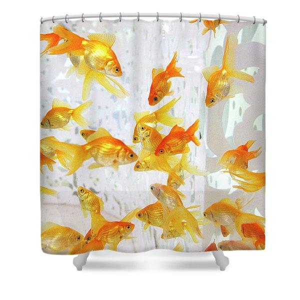 fancy goldfish shower curtains fine
