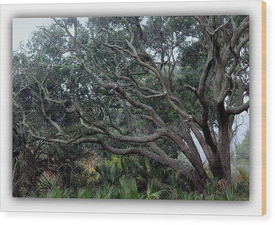 Southern Trees 2 Photograph By Rosanne Jordan