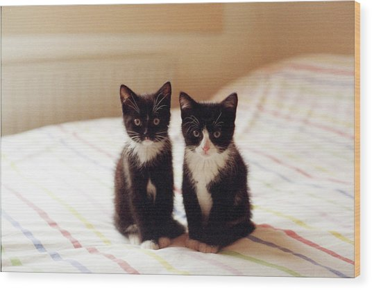 two black and white