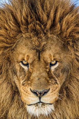 angry lion art fine