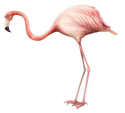pink flamingos drawings pixels