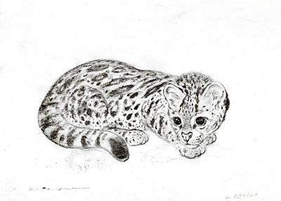 Ocelot Kitten Drawing by Kurt Tessmann