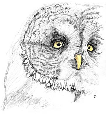 Owl Drawings for Sale (Page #24 of 53)