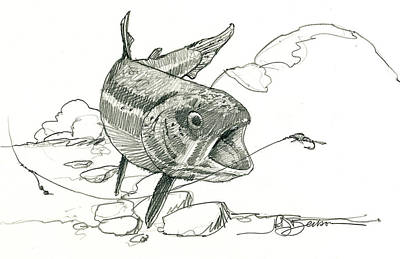Fly Fishing Drawings for Sale