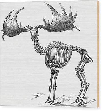 Giant Deer, 19th Century Artwork Photograph by