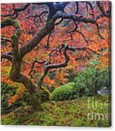 Japanese Maple Tree Photograph by Mark Kiver