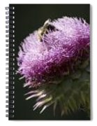 Bee On Thistle Spiral Notebook