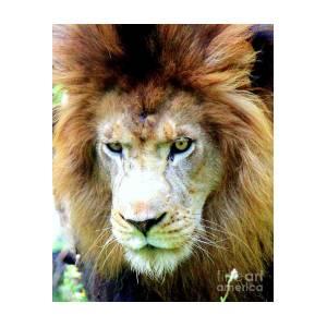 fierce lion by kathy