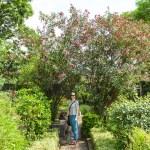 Puk in the Patan Museum Garden