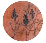 Banksia-menziessi-copper-disc