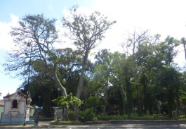 Quiet parks - all through San José