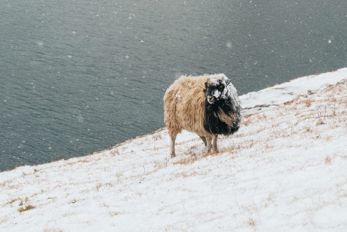 Saksun- The Faroe Islands Guide - Renee Roaming