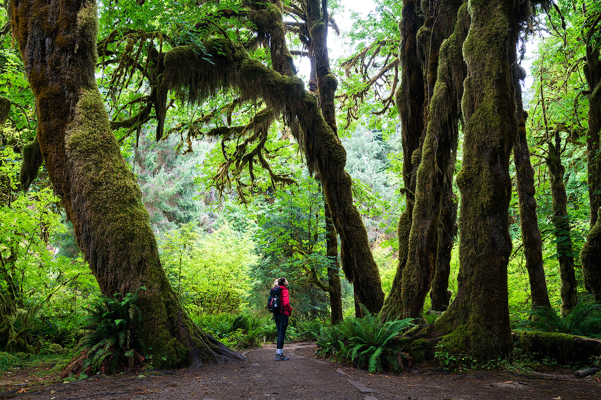 AMERICA'S NATIONAL PARKS – ALL 59 RANKED BEST TO WORST - OLYMPIC NATIONAL PARK