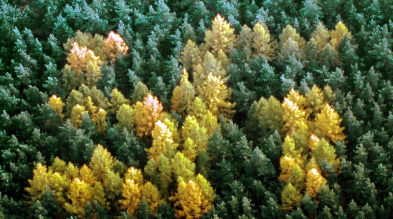 Mandatory Credit: Photo by SIPA PRESS / Rex Features (208547a)  AERIAL VIEW OF A NAZI SWASTIKA OF LARCH TREES IN A FOREST OF SPRUCE FIRS PRENZLAN PLANTED BY NAZIS DURING SECOND WORLD WAR GERMANY